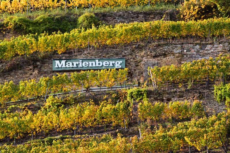 Weinberg Marienberg
